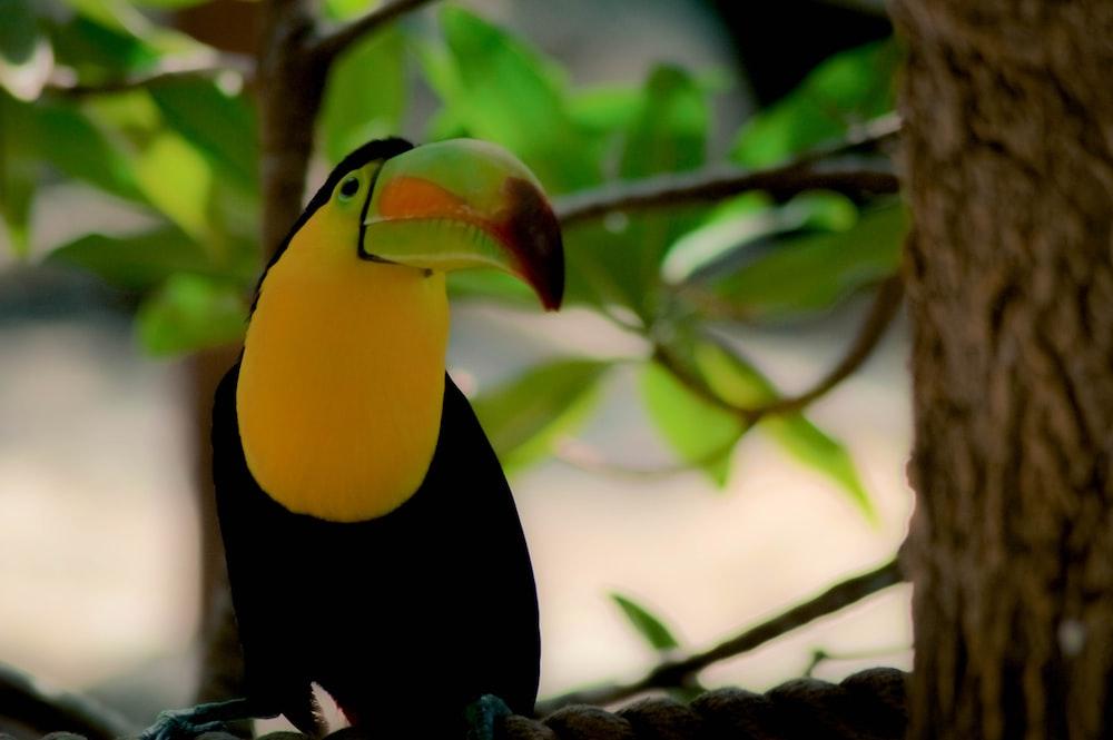 macau bird on tree