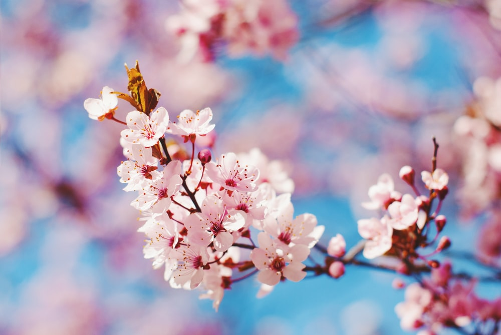 900 Spring Images Download Hd Pictures Photos On Unsplash
