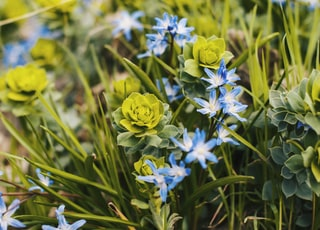 blue and green petaled flowers