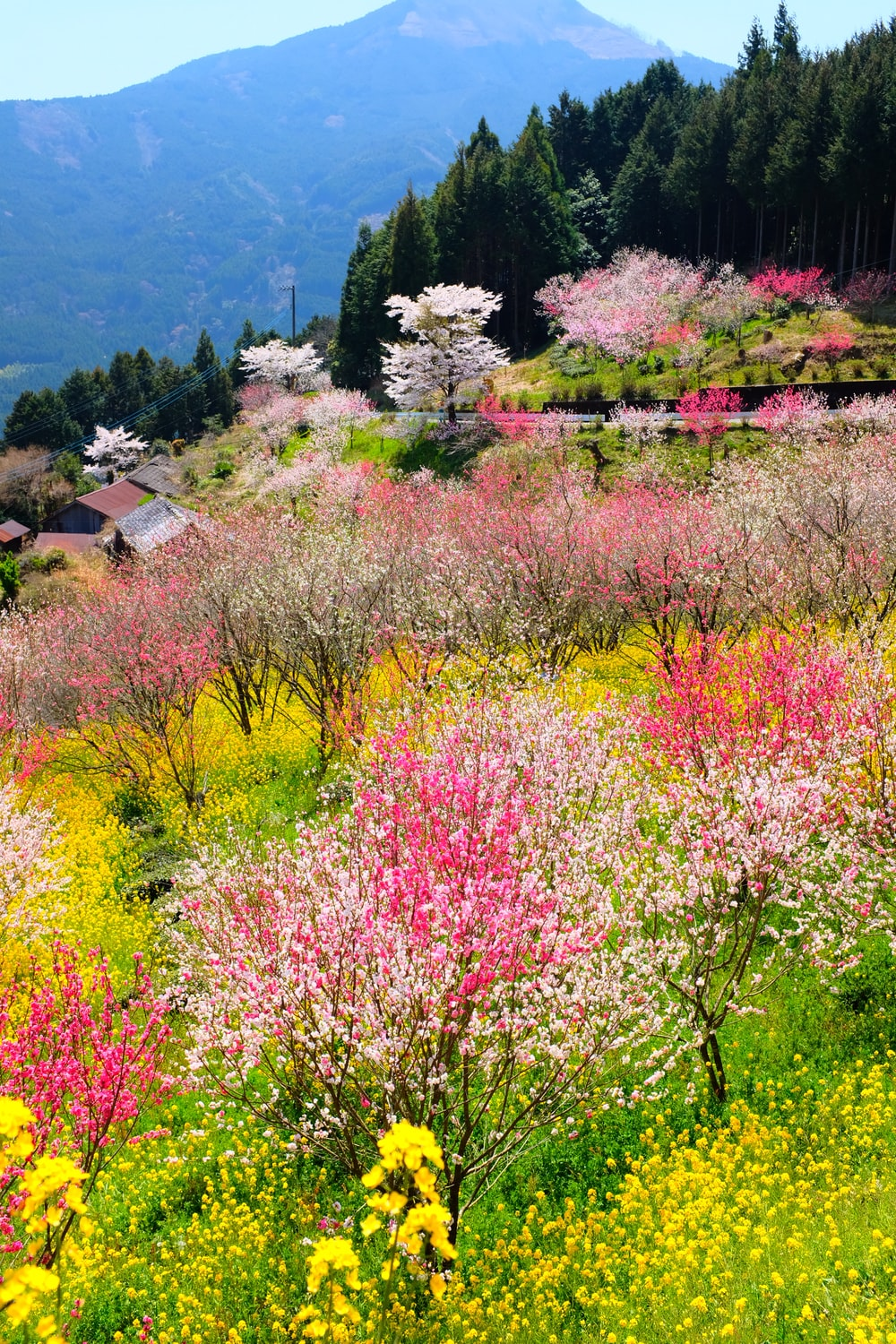 assorted color flower field during daytime