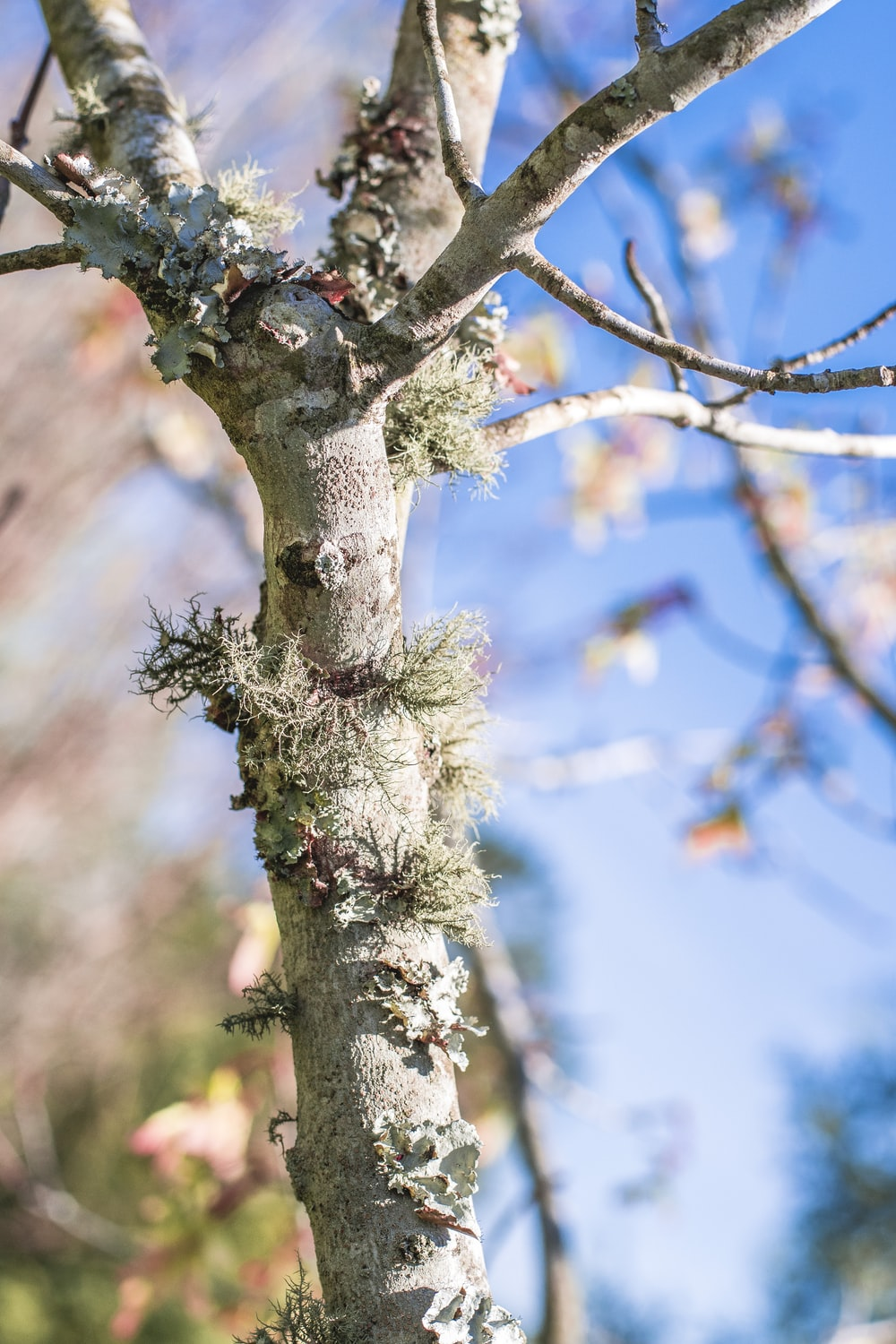 close-up photography of bare tree