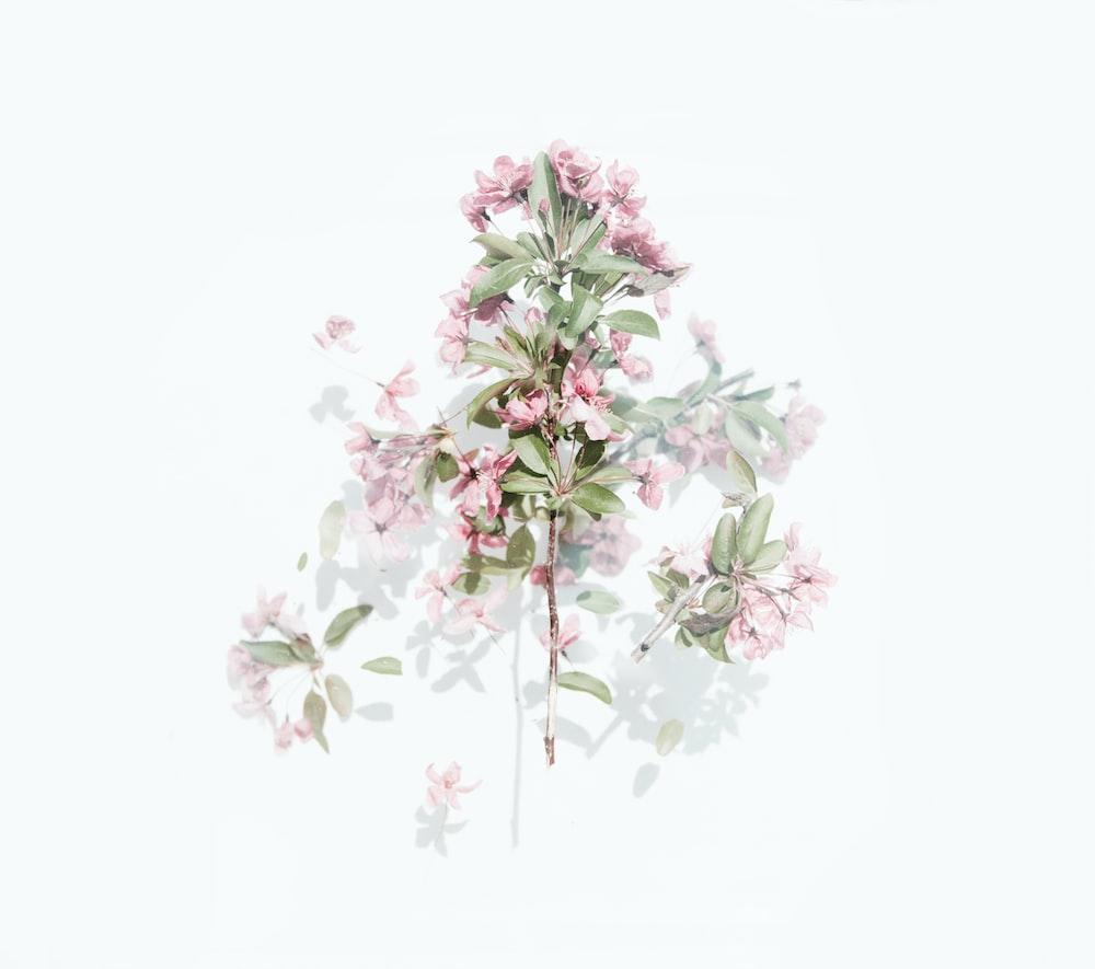 pink flowers in bloom