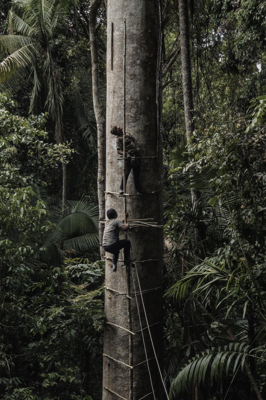 two men climbing on tall tree