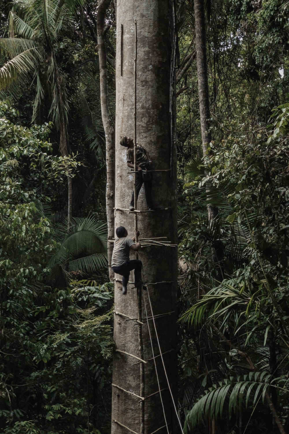 two men climbing on tall tree
