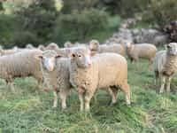 The Unique Sheep fiction stories