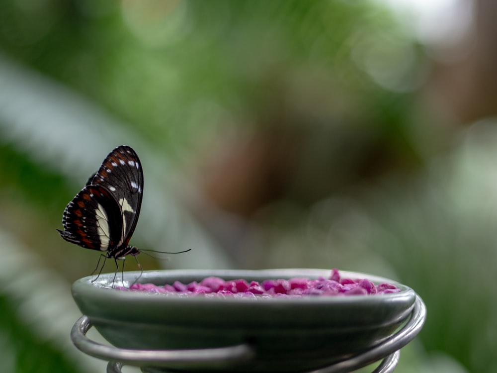black and brown butterfly perched on green ceramic bowl in closeup photography