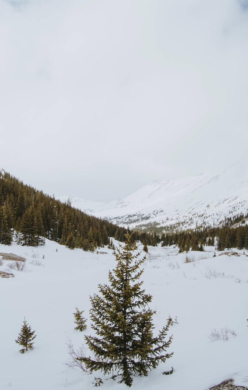 high-angle photography of tree on snow