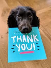 THANK YOU!!! thankyou stories