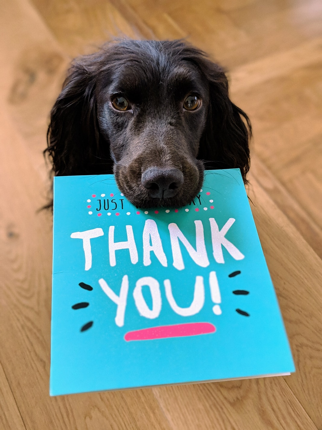 dog biting Thank You mail paper