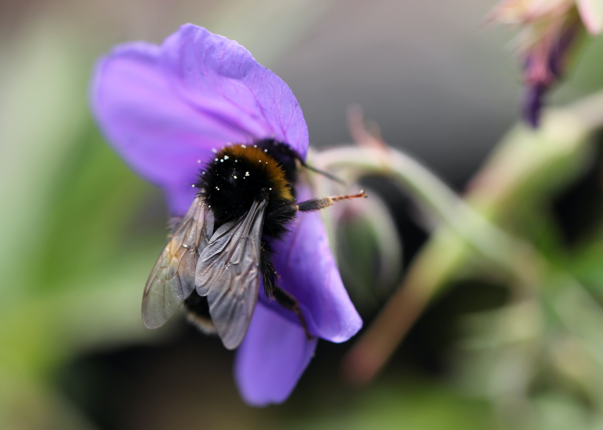 The problem with agriculture: biodiversity & pesticides