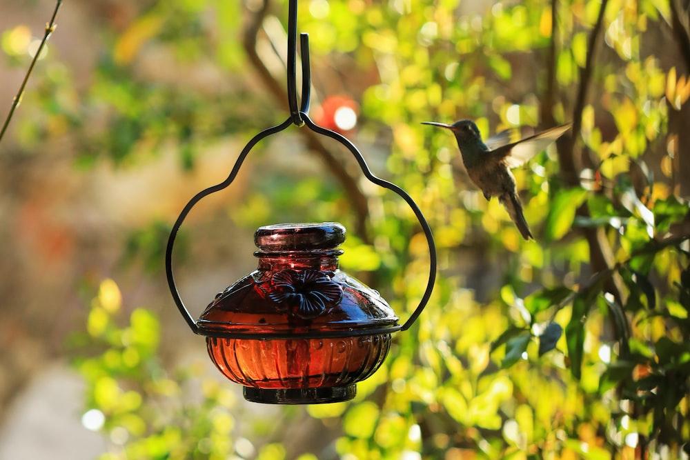 selective focus photography of lantern