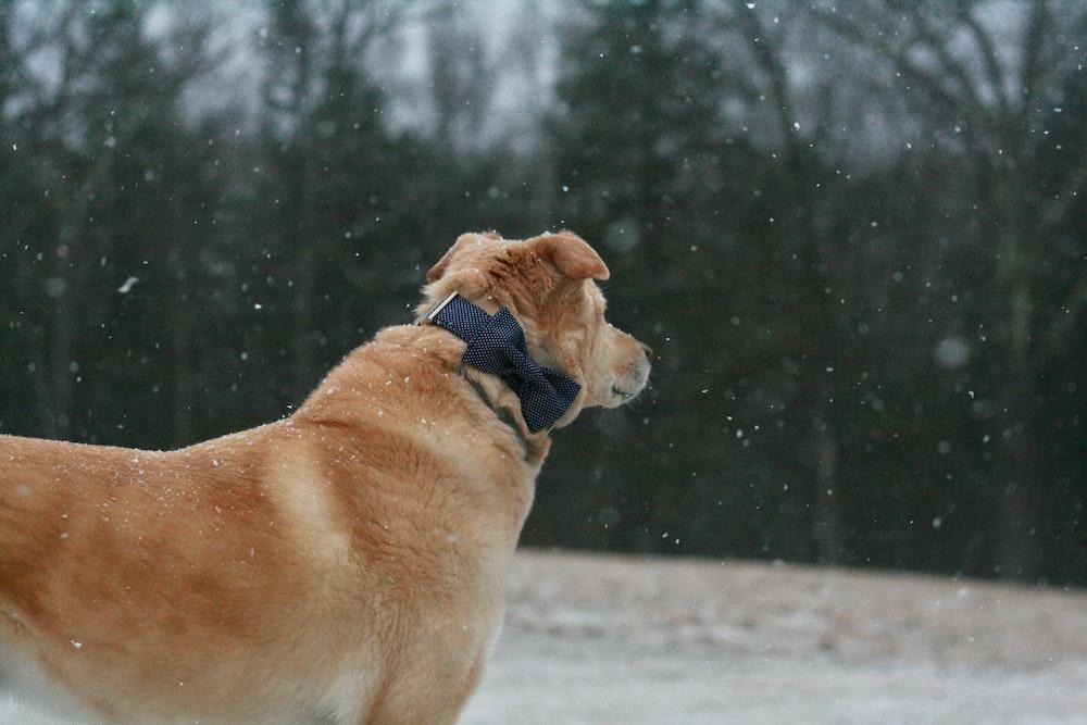 brown dog outside