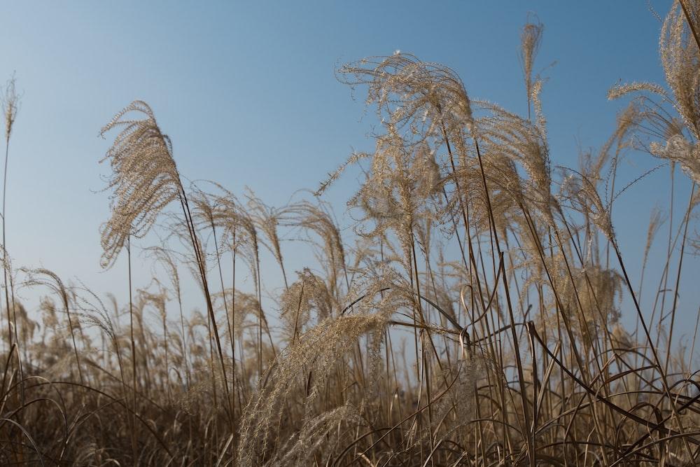 brown grassland