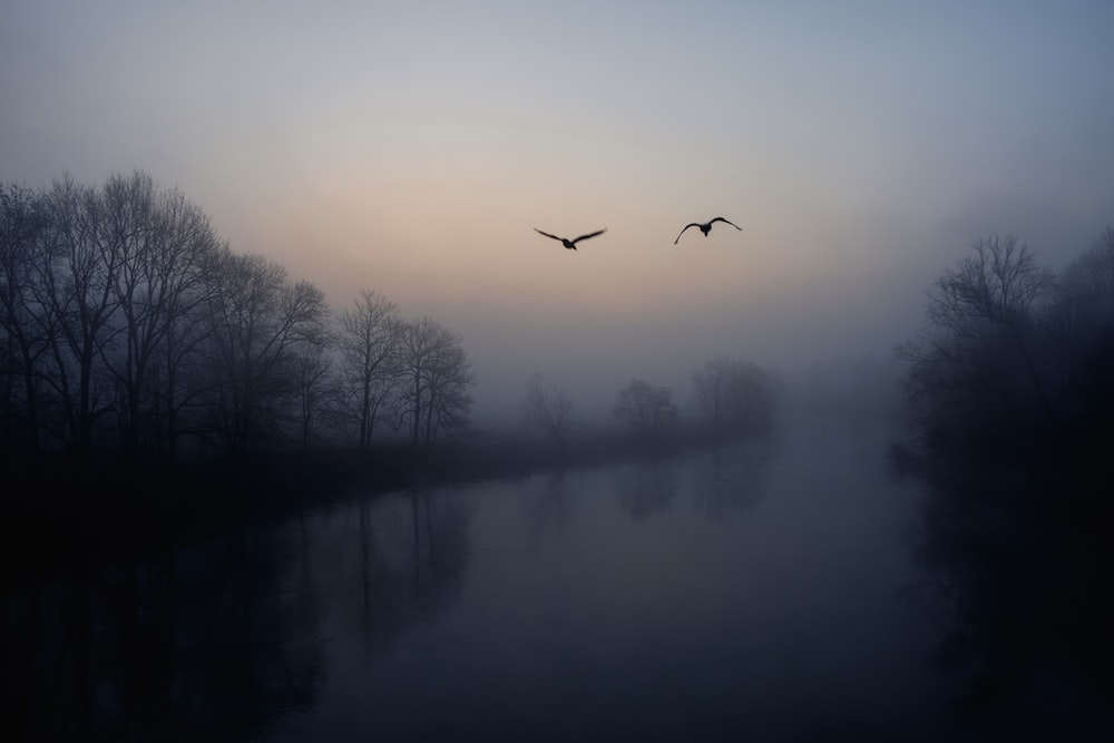 two black birds flying near lake and trees