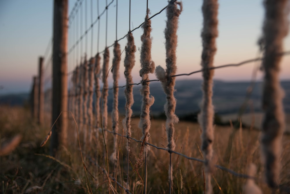 brown and grey ranch fence photography