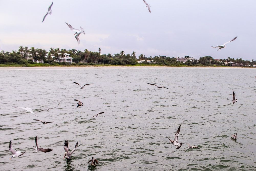 gray birds flying beside body of water