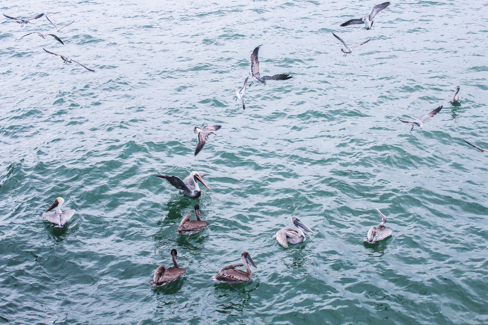 gray colored birds on body of water