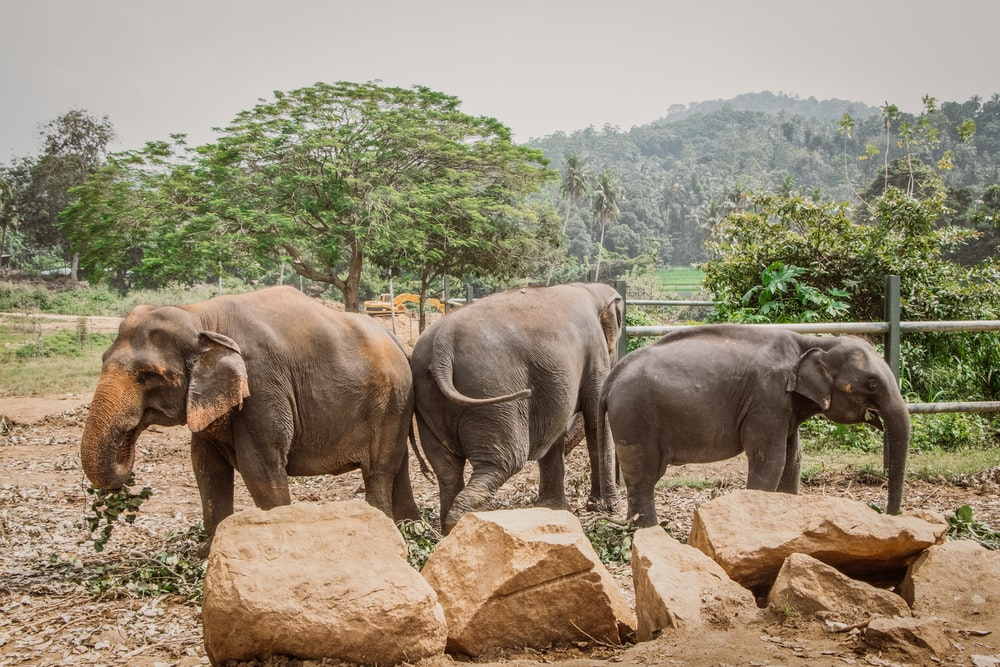 three elephants inside fence during daytime
