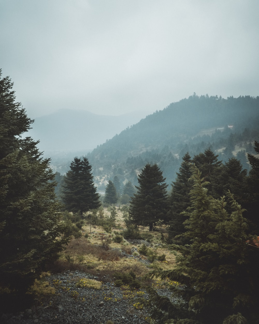 green pine trees aerial photography