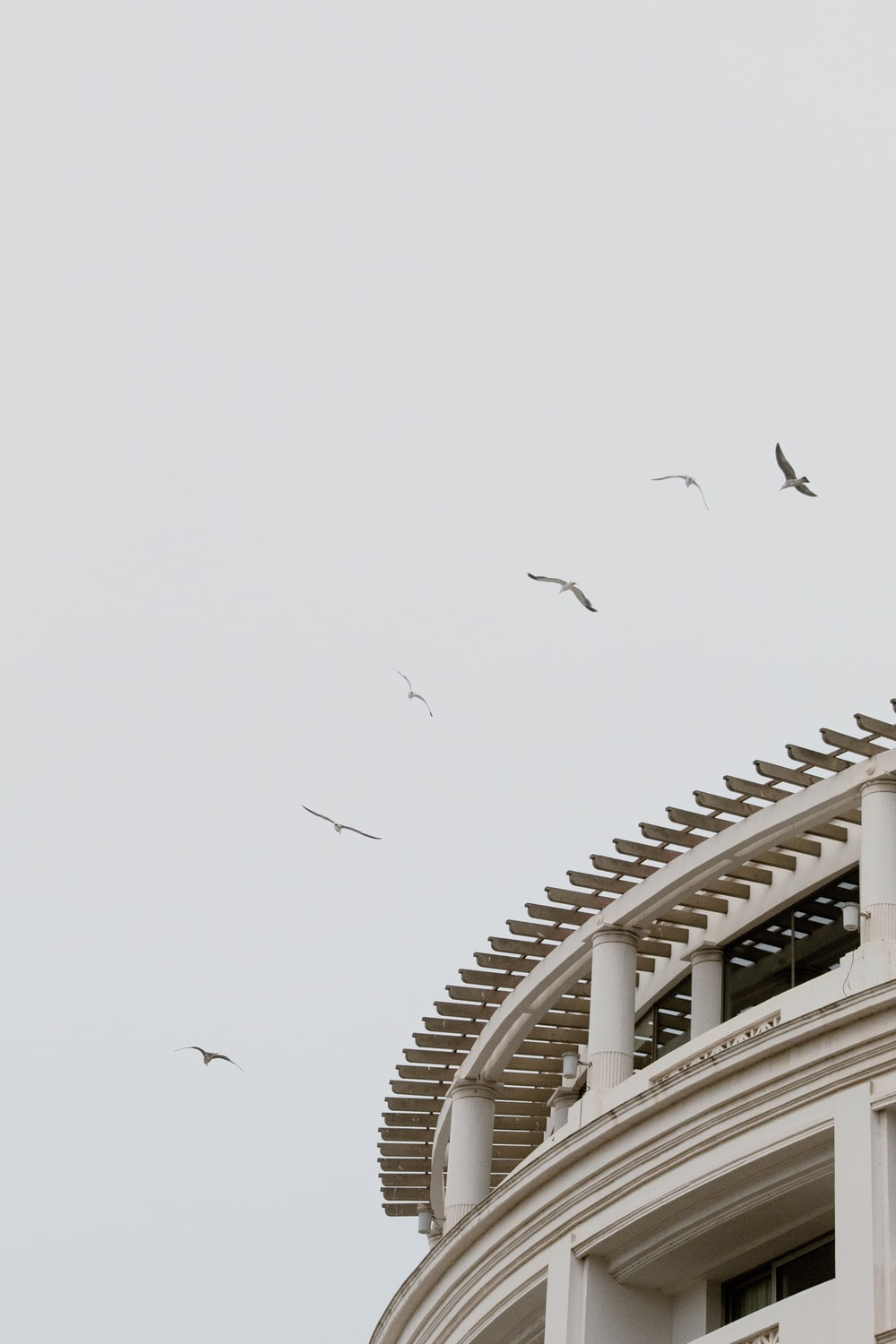 birds flying over the building