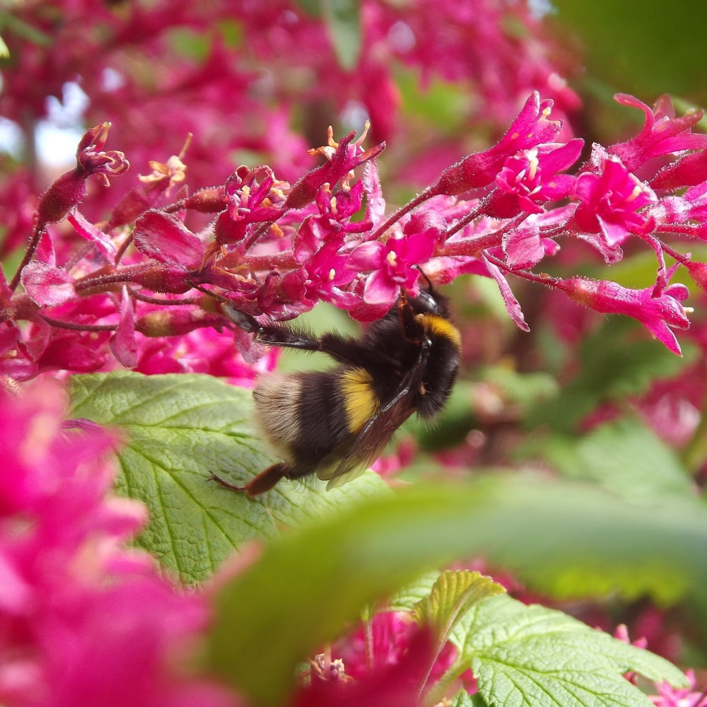 bee pollinating plant during daytime