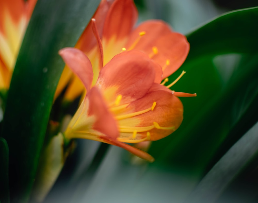 orange and yellow petaled flower