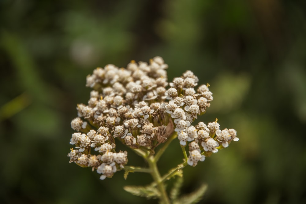 selective focus photography of gray flower buds