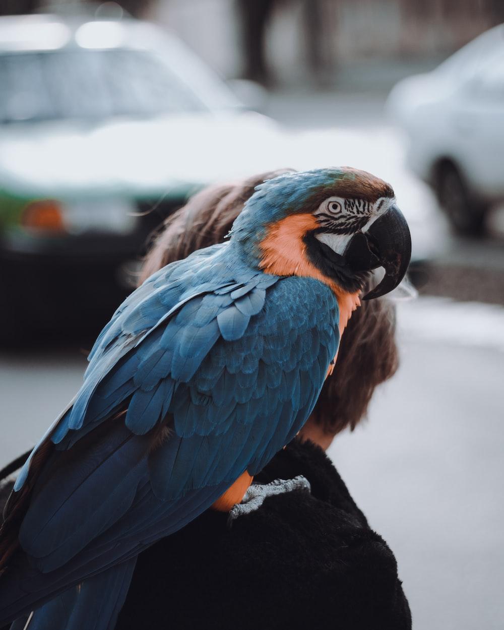 blue and orange macaw photography