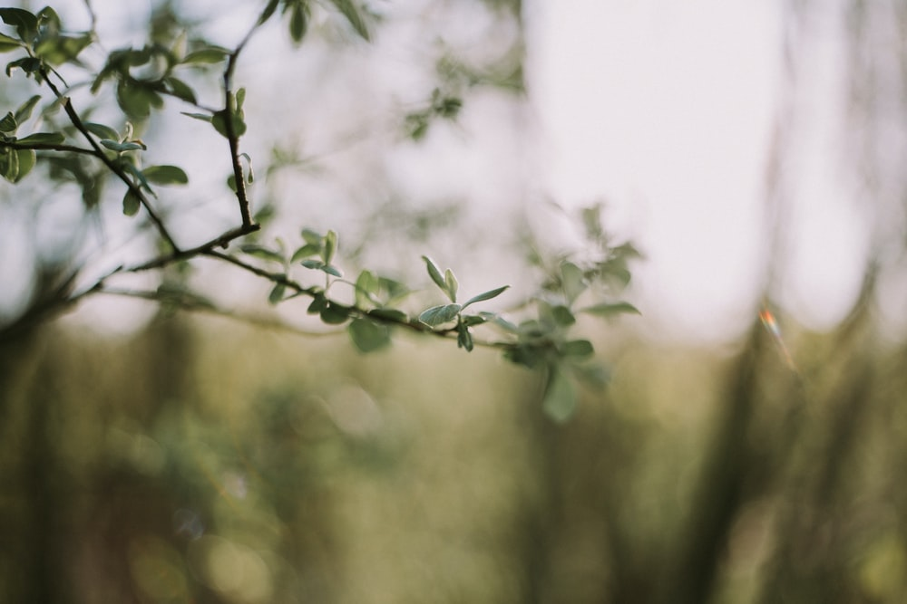 shallow depth of field photography of green-leaf plant