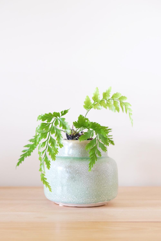 green-leaf plant in white vase