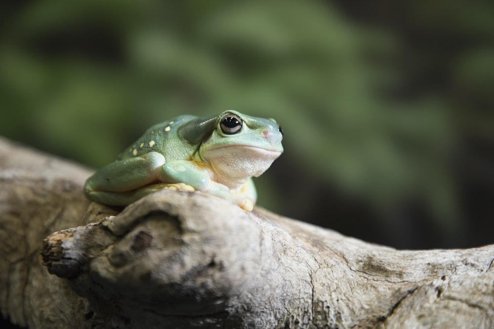 gray toad on brown tree