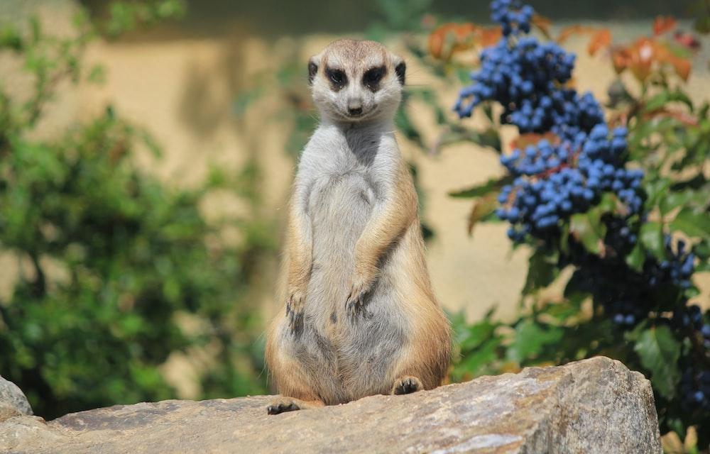 merret animal standing on rock
