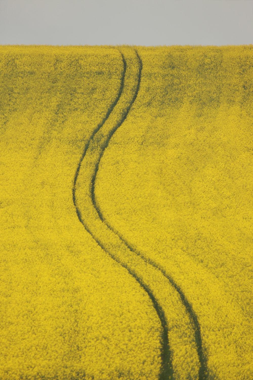 grass zig zag pathways