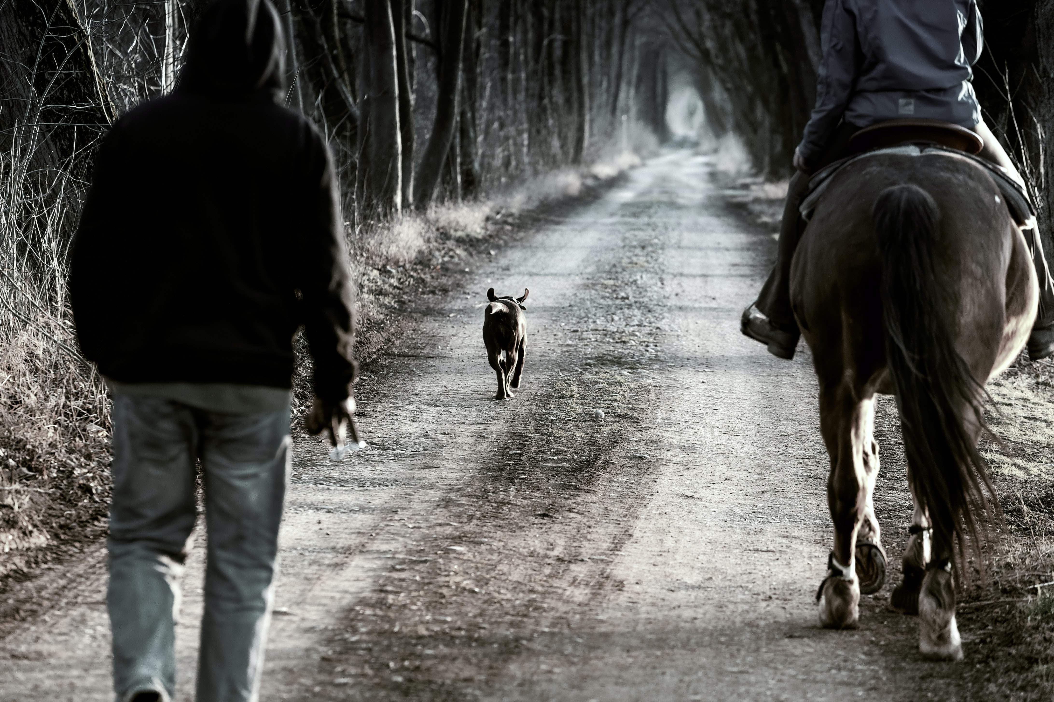 dog walking on pathway between two person