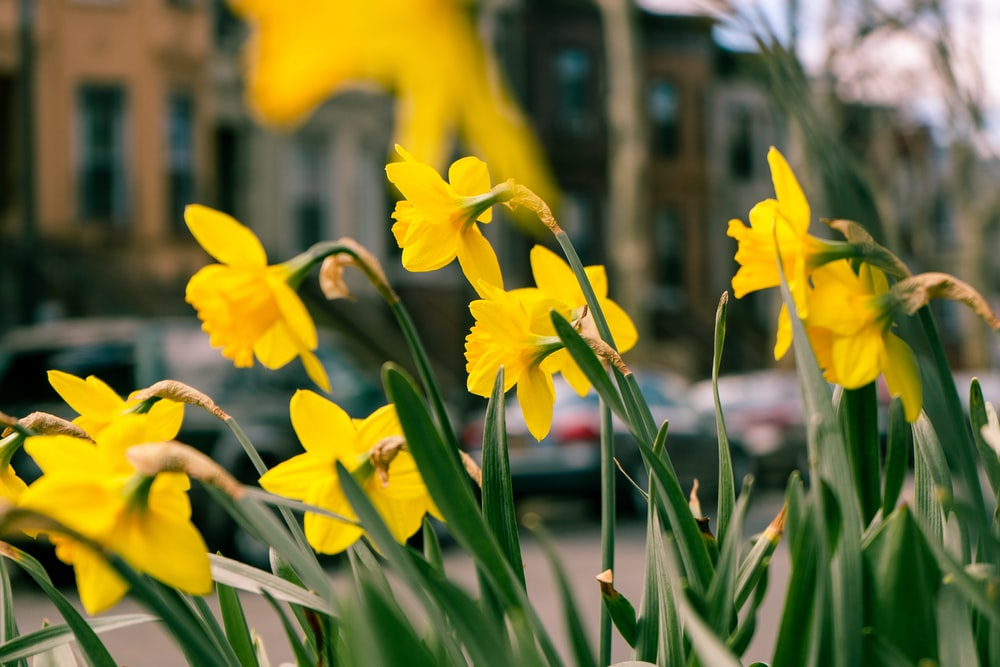 closeup photo of yellow flower