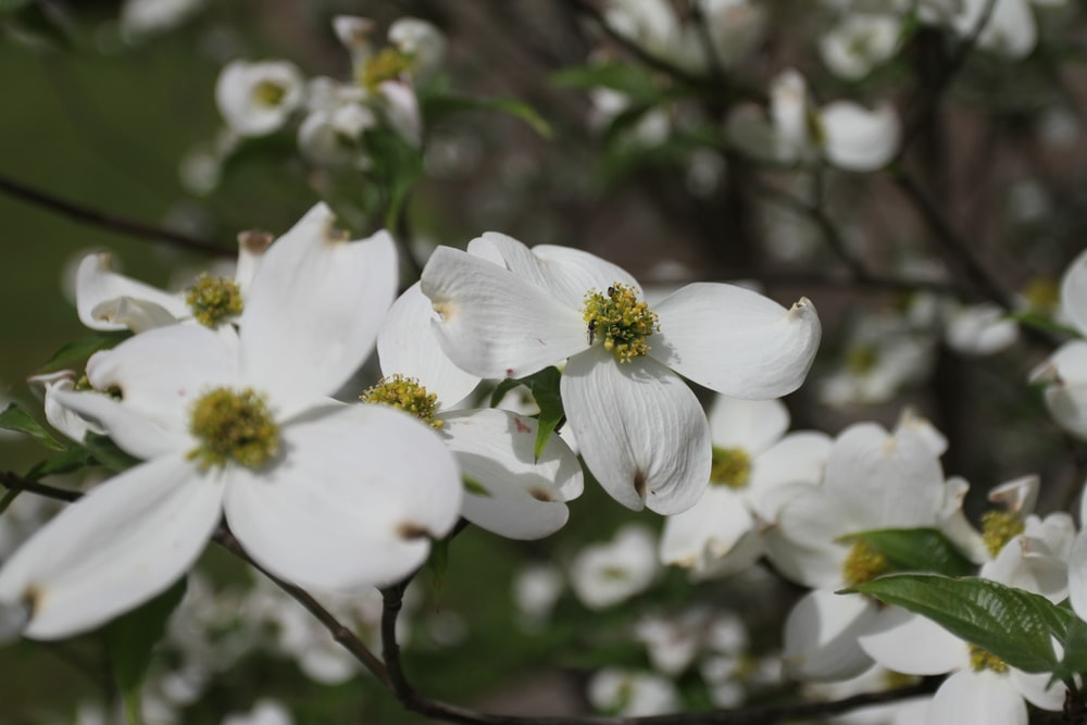 white-petaled flower