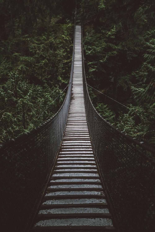 empty hanging footbridge through forest