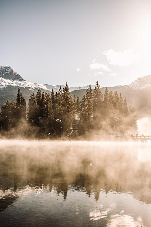 wilderness during daytime