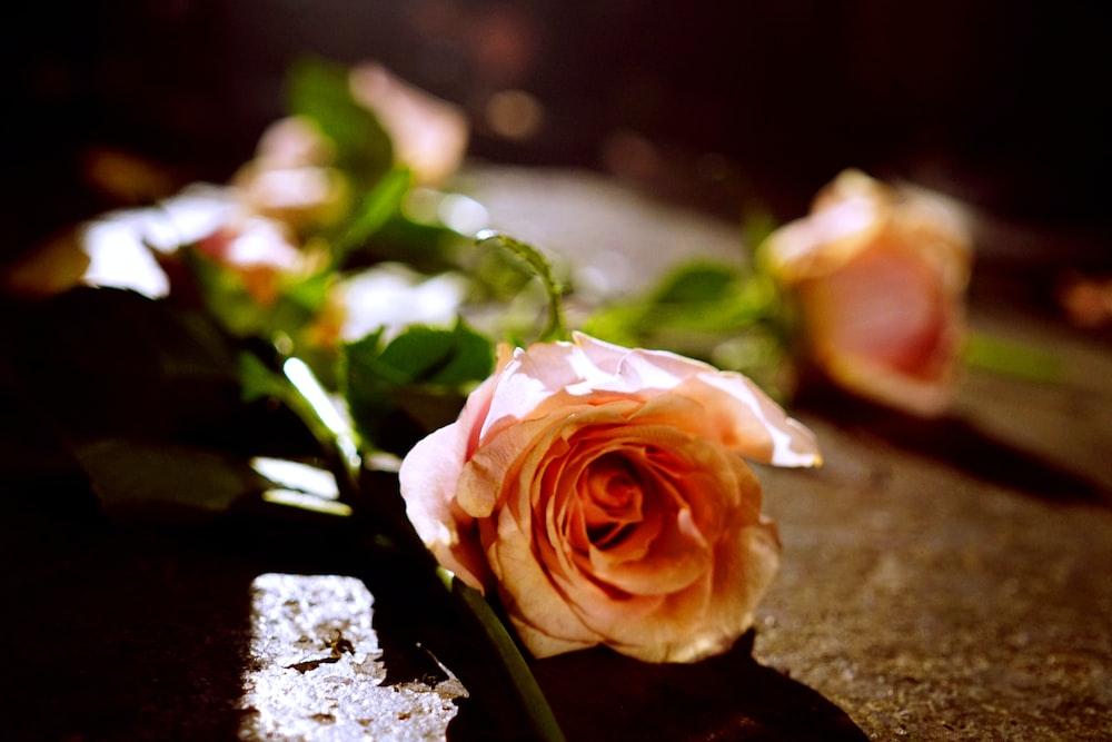 orange rose on brown surface