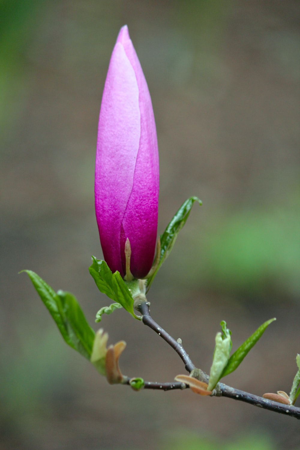 selective focus photography of unbloom flower