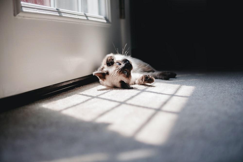 white cat lying beside window