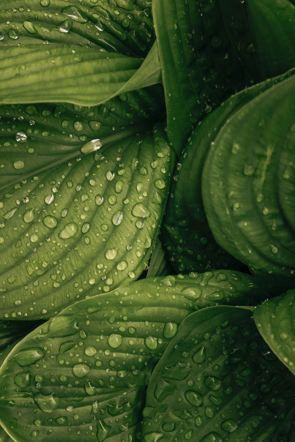 water drop on green plant