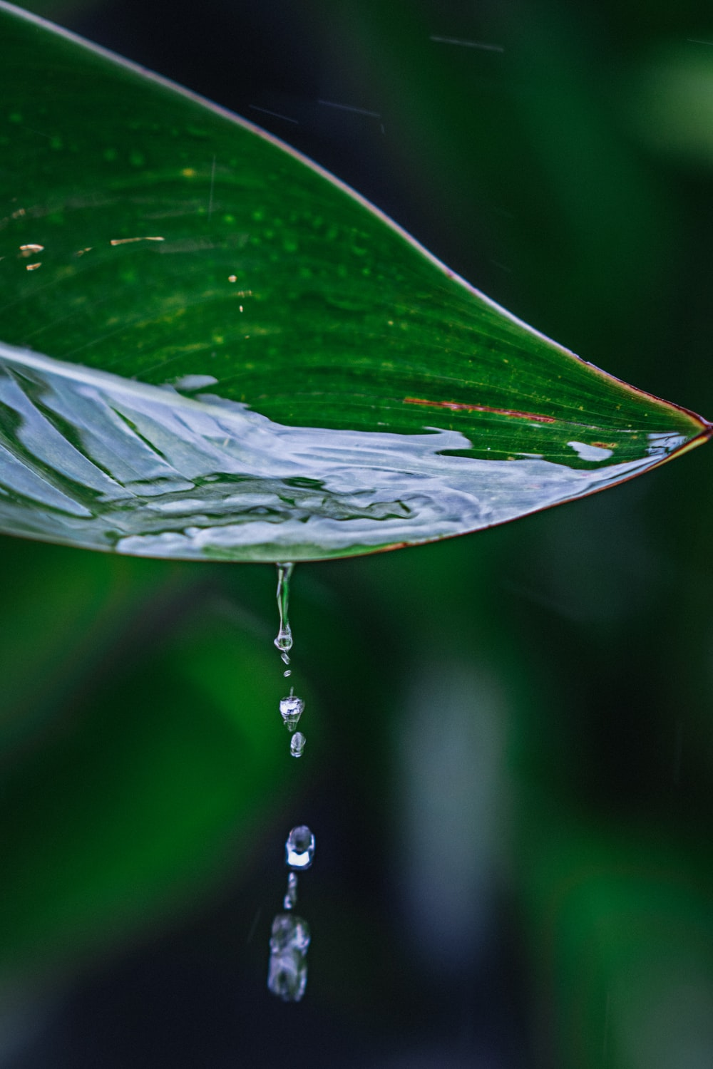 selective focus photography of water on leaf