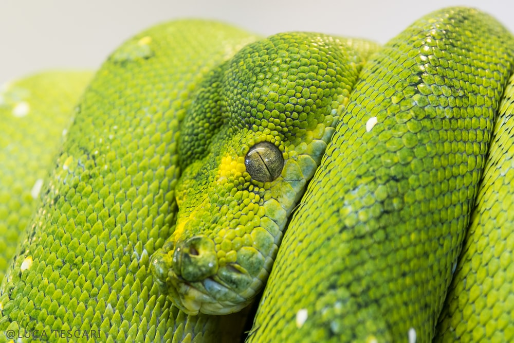 green snake on focus photography