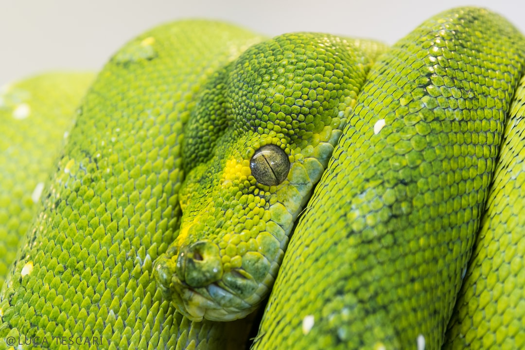 Python : comprendre les docstrings en 1 minute
