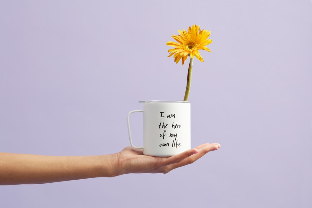 blooming yellow gerbera daisy flower in white and black mug