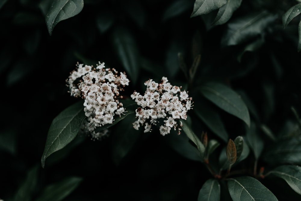 low light photography of white-petal flowers