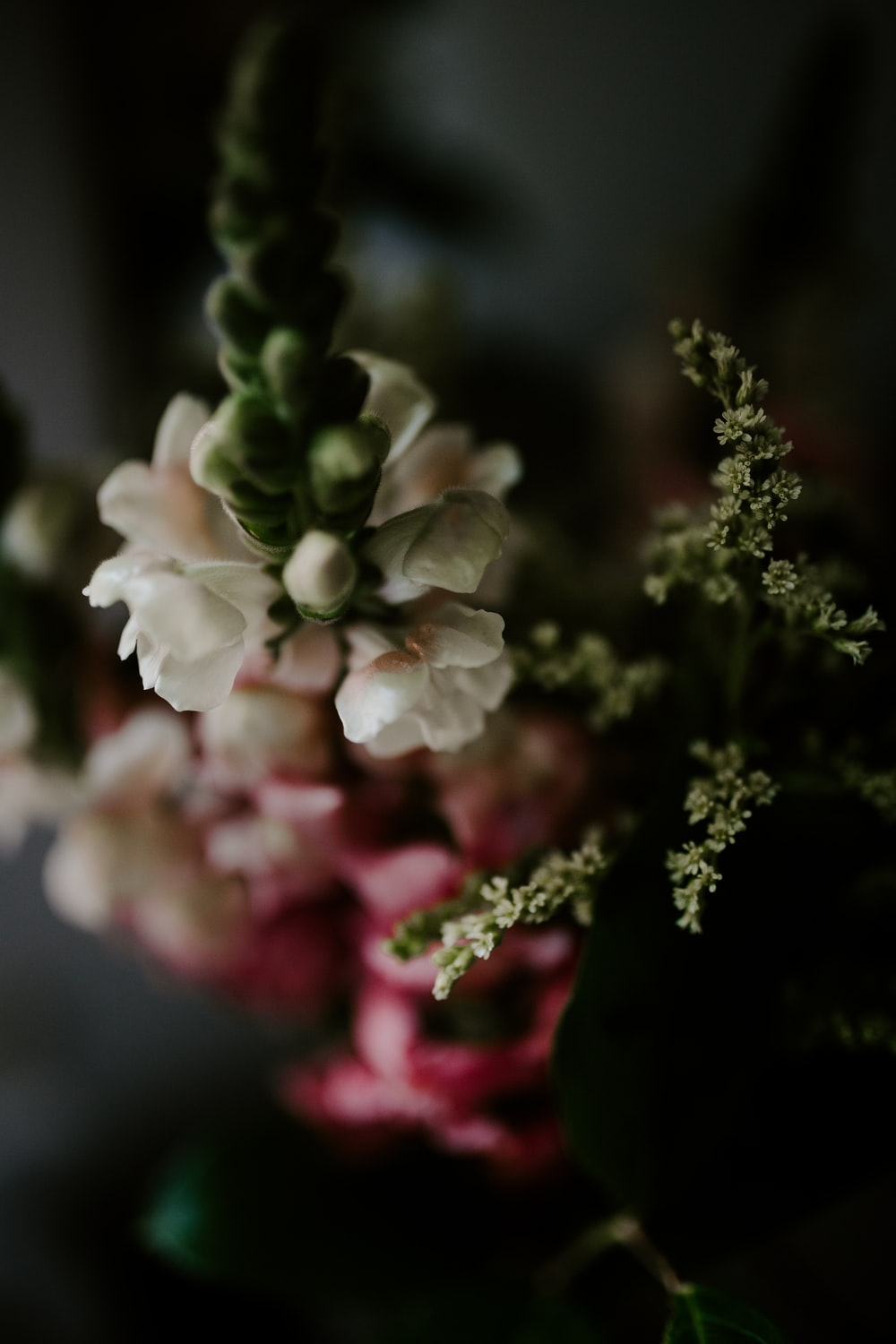 selective focus photography of white and pink flowers