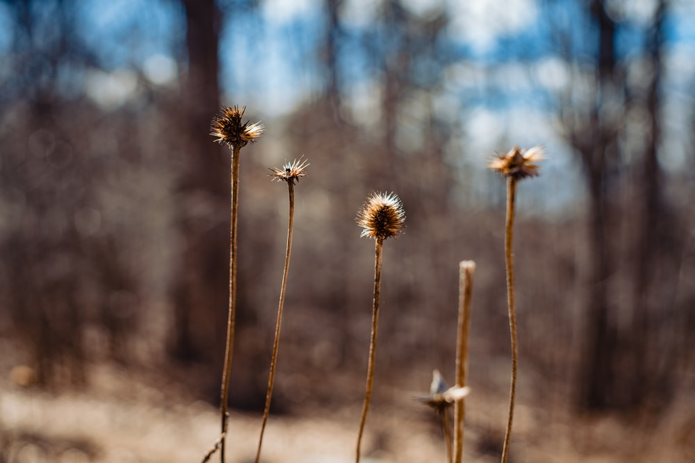 selective focus photography of brown plants