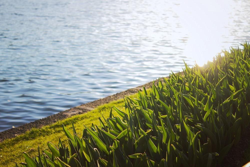 body of water beside green-leafed plants